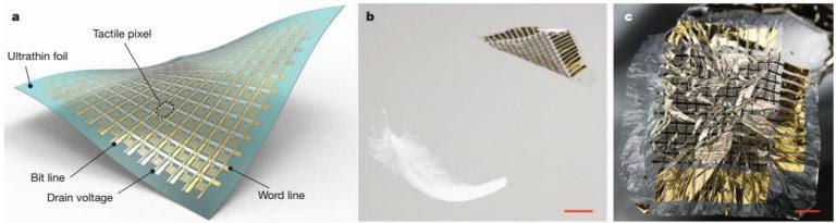 (a)东京大学染谷隆夫等人开发的有机电子薄膜感测器示意图(b)其轻薄程度可与羽毛相比较(c)可像纸般揉捏折叠的电子感测器。图/Kaltenbrunner et al , 2013