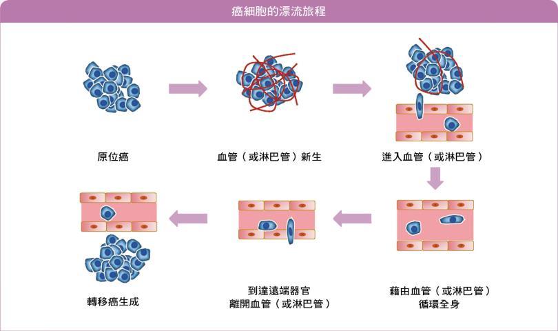 癌细胞的漂流旅程