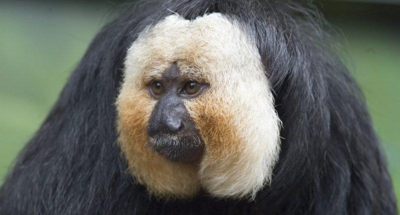 芬兰动物园实验:猴子喜欢马路上吵杂的交通声胜过安静的森林缩略图