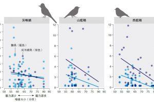 鸟类压力来源:当环境噪音越大,孵化的雏鸟及其母鸟体内的皮质酮(与压力反应有关的激素)浓度越低。此负相关性似乎不符直觉,但在人类创伤后压力疾患(PTSD)患者身上也观察到类似现象;慢性压力会导致皮质酮分泌持续增加或减少。