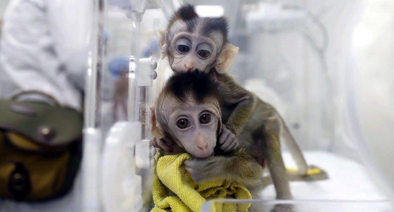 科学家在猴子大脑中植入电极获取视觉,未来可让盲人获得视力