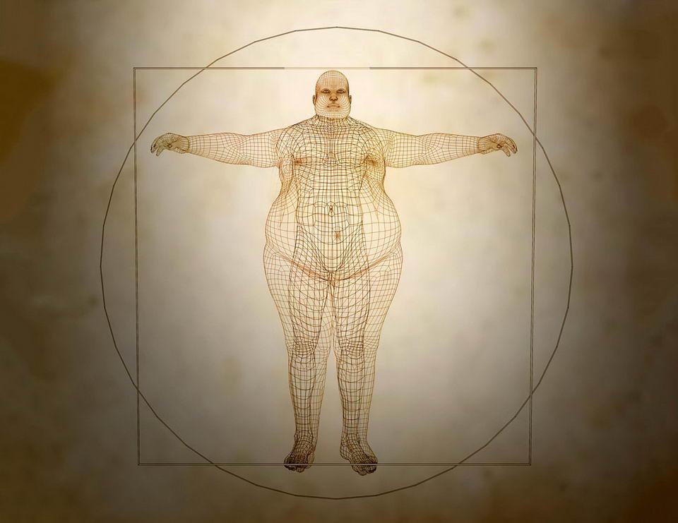科学家发现肥胖基因ALK:抑制它就能减肥插图
