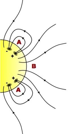 日冕洞(B)附近的磁场为开放向外。