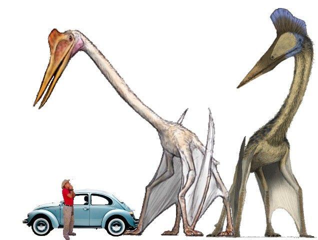 风神翼龙究竟有多大,给你看一张图直观感受下插图6