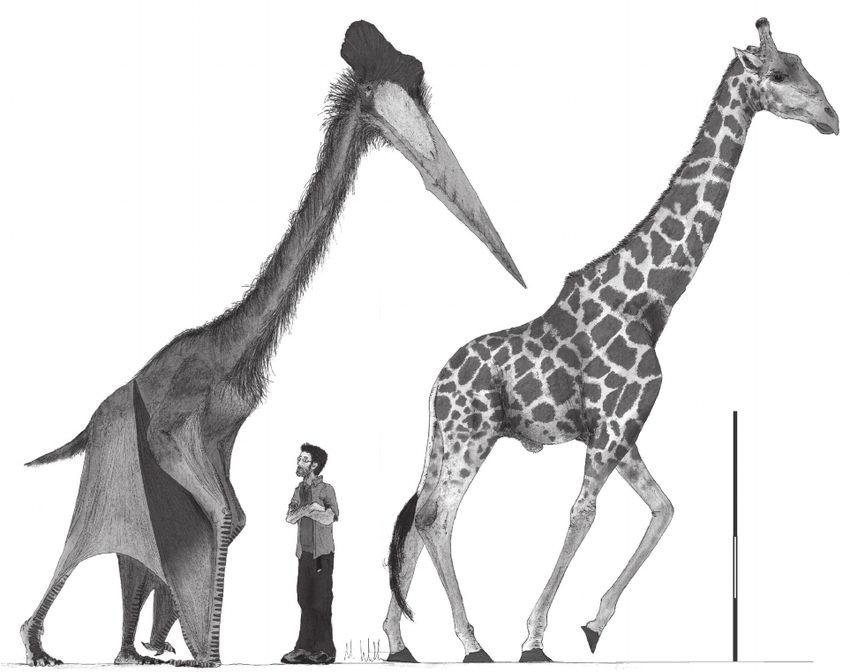 风神翼龙究竟有多大,给你看一张图直观感受下插图4
