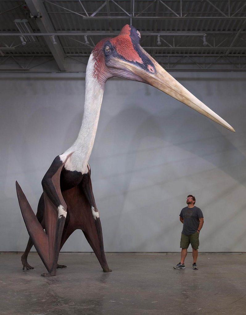 风神翼龙究竟有多大,给你看一张图直观感受下插图8