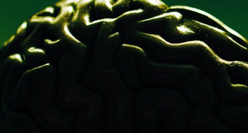 人死后大脑的某些细胞(胶质细胞)会变得更活跃