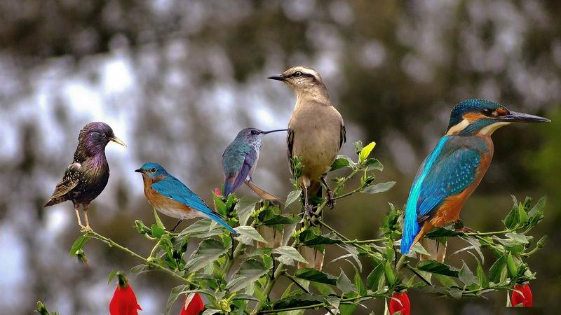 鸟类的多样性非常高,种类超过8000 种。